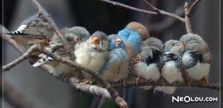 Kuşlar İçin Yapılması Gerekenler