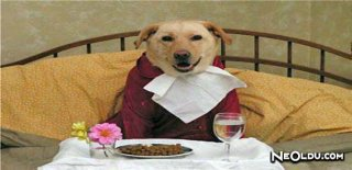 Köpeklerin Beslenmesi