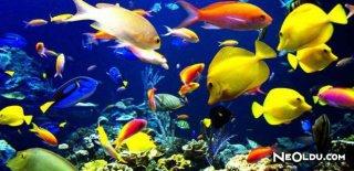 Akvaryum Balıklarının Beslenmesi