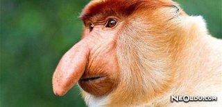 Dünyanın En İlginç Hayvanları