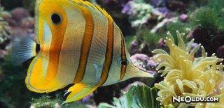 Deniz Canlıları Hastalıkları