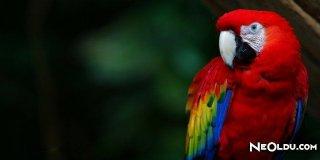 Papağan Sağlığı