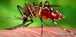 Tarihin En Büyük Katilleri: Sivrisinekler