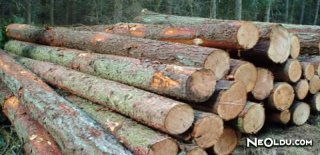 Rüyada Odun Görmek Ne Anlama Gelir?