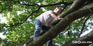 Rüyada Ağaca Çıkmak Ne Anlama Gelir