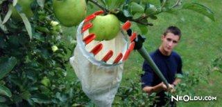 Rüyada Ağaçtan Meyve Toplamak Ne Anlama Gelir?