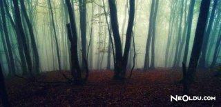 Rüyada Orman Görmek Ne Anlama Gelir?