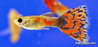 Rüyada Akvaryum Balığı Görmek Ne Anlama Gelir?