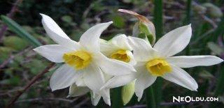 Rüyada Fulya Çiçeği Görmek Ne Anlama Gelir?