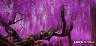 Dünyanın En İlginç 18 Ağacı