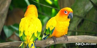 Rüyada Sarı Kuş Görmek Ne Anlama Gelir?