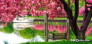 Rüyada Bahar Görmek Ne Anlama Gelir?