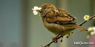 Rüyada Serçe Kuşu Görmek Ne Anlama Gelir?