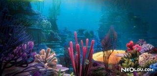 Rüyada Mercan Görmek Ne Anlama Gelir?