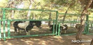 Rüyada Hayvanat Bahçesi Görmek Ne Anlama Gelir?