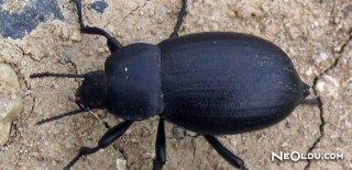 Rüyada Kara Böcek Görmek Ne Anlama Gelir?
