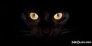 Rüyada Kara Kedi Görmek Ne Anlama Gelir?