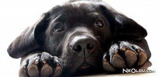 Rüyada Kara Köpek Görmek Ne Anlama Gelir?