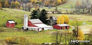 Rüyada Çiftlik Görmek Ne Anlama Gelir?