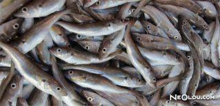 Rüyada Mezgit Balığı Görmek Ne Anlama Gelir?