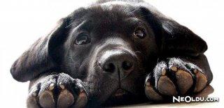 Rüyada Siyah Köpek Görmek Ne Anlama Gelir?
