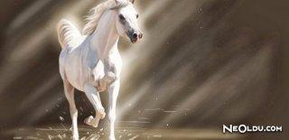 Rüyada Beyaz At Görmek Ne Anlama Gelir?