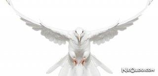 Rüyada Beyaz Kuş Görmek Ne Anlama Gelir?