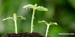 Rüyada Bitki Görmek Ne Anlama Gelir