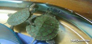 Rüyada Su Kaplumbağası Görmek Ne Anlama Gelir?