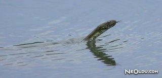 Rüyada Su Yılanı Görmek Ne Anlama Gelir?