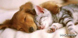Rüyada Kedi Köpek Görmek Ne Anlama Gelir
