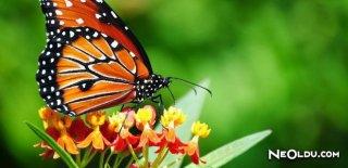 Rüyada Kelebek Görmek Ne Anlama Gelir?