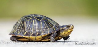 Rüyada Tosbağa Görmek Ne Anlama Gelir?