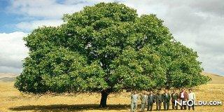Rüyada Ceviz Ağacı Görmek Ne Anlama Gelir?