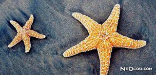 Falda Deniz Yıldızı Görmek Ne Anlama Gelir