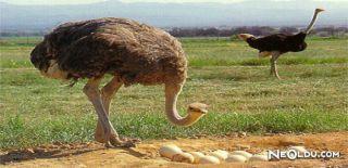 Falda Deve Kuşu Görmek Ne Anlama Gelir