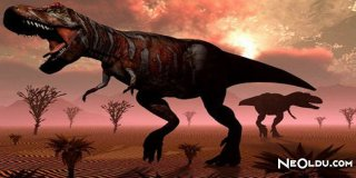 Falda Dinozor Görmek Ne Anlama Gelir?