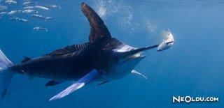 Rüyada Kılıç Balığı Görmek Ne Anlama Gelir?