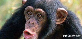 Falda Maymun Görmek Ne Anlama Gelir
