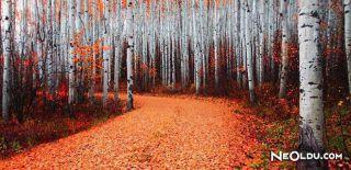 Falda Kavak Ağacı Görmek Ne Anlama Gelir