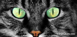 Falda Kedi Gözü Görmek Ne Anlama Gelir