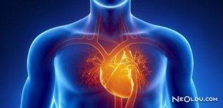 Kalp Büyümesi Nedir ve Belirtileri Nelerdir?
