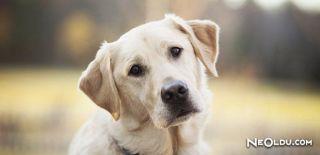 Falda Köpek Görmek Ne Anlama Gelir