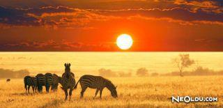 Mzansi Eperience ile Bedava Güney Afrika Turu