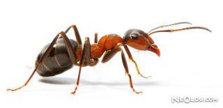 Falda Karınca Görmek Ne Anlama Gelir