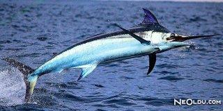 Falda Kılıç Balığı Görmek Ne Anlama Gelir