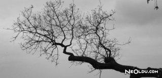 Falda Ağaç Dalı Görmek Ne Anlama Gelir