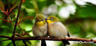 Falda Ağaçta Kuşlar Görmek Ne Anlama Gelir