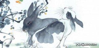 Tavşan Burcu Kadını Genel Özellikleri