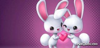 Tavşan Burcu Genel Özellikleri